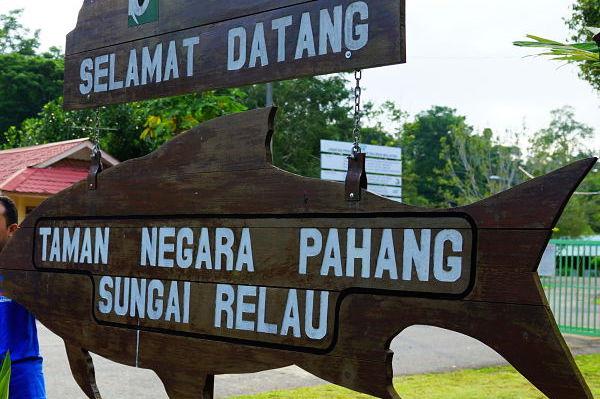 taman negara pahang sungai relau_opt (1)